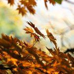 空気が乾燥してくる秋だからこそ徹底的にカビ取りをしよう!