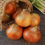 秋に植えたい野菜の詳しい植え方について《玉ねぎ編》