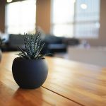 部屋に飾りたいおしゃれな観葉植物 BEST10