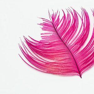 ピンクの羽根
