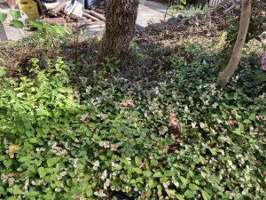元の荒れ果てた庭