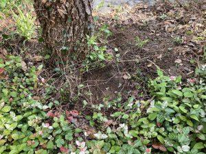 庭に苗を植えるために穴を掘る