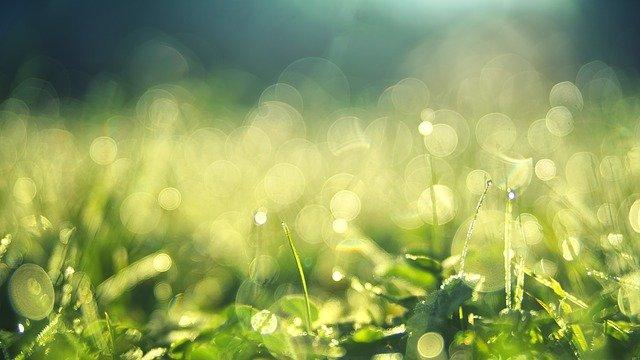 朝露に濡れる草
